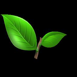 tea-plant-leaf-icon